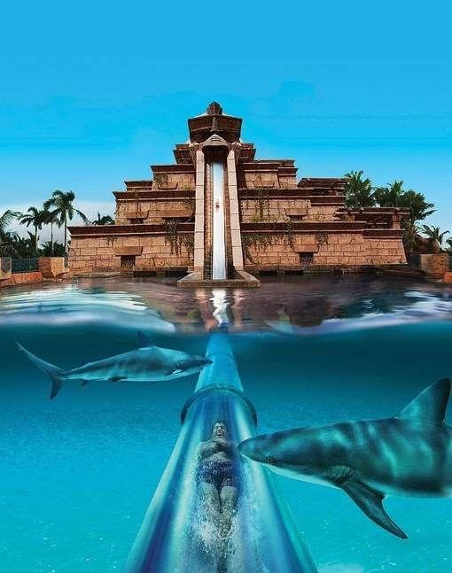 Leap of Faith - Bahamas - Sachi Shiksha